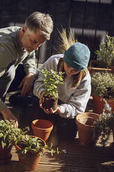 Father and daughter planting together on balcony - MCF00727