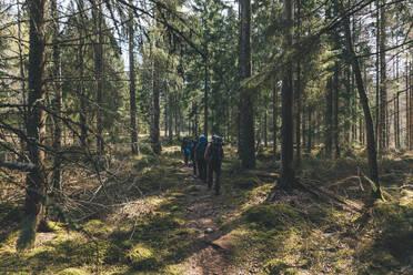 Young people hiking in forest, Sormlandsleden, Sweden - GUSF03717