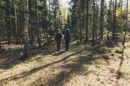 Young people hiking in forest, Sormlandsleden, Sweden - GUSF03720