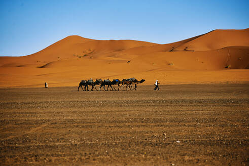 Caravan of camels across the desert - CAVF79968
