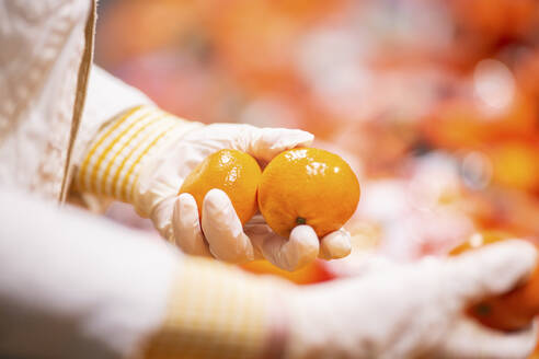 Hands with protectice gloves holding tangerines, close-up - ASCF01270