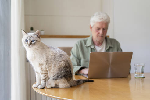 Portrait of cat sitting on table by senior man using laptop at home - AFVF06173