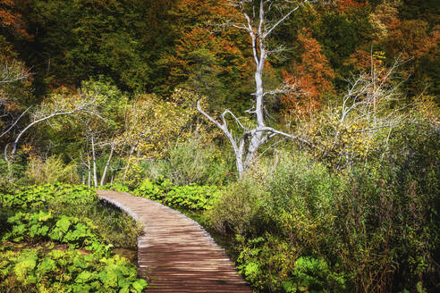 Croatia, Boardwalk across lush autumn foliage in Plitvice Lakes National Park - ABOF00521