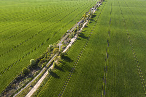 Germany, Brandenburg, Drone view of countryside dirt road and vast green fields in spring - ASCF01314