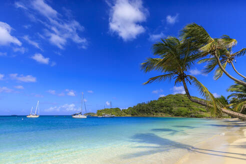 Stunning Saltwhistle Bay, yachts, white sand beach, blue sea, overhanging palm trees, Mayreau, Grenadines, St. Vincent and The Grenadines, Windward Islands, West Indies, Caribbean, Central America - RHPLF14598