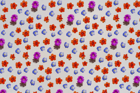Pattern of colorful flower heads - GEMF03652