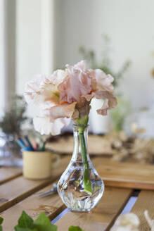 Spain, Pink blooming flowers in glass vase - AFVF06242