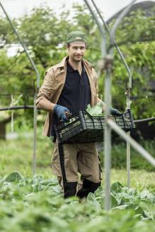 Organic farmer harvesting kohlrabi in greenhouse - MCVF00355