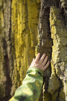 Toddler's hand touching bark - BRF01446