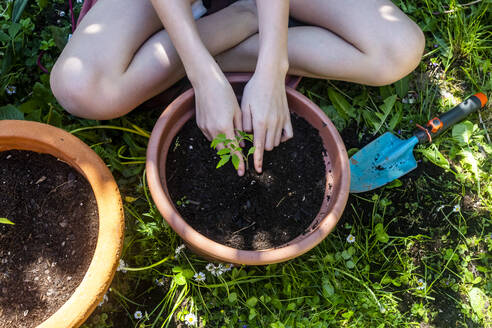 Crop view of girl potting tomato plant in a garden - SARF04586