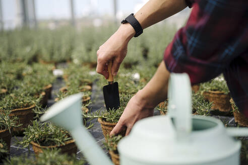 Close-up of woman working with hand trowel on rosemary plants - JOSEF00687