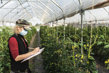 Female farm worker with surgical mask checking the growth of organic tomatoes in a greenhouse - MCVF00370