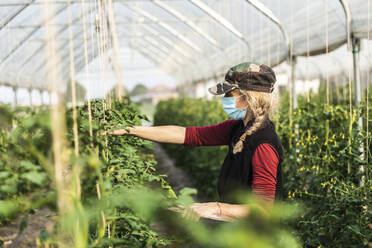 Female farm worker with surgical mask checking the growth of organic tomatoes in a greenhouse - MCVF00373