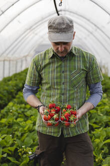 Farmer holding freshly picked strawberries, organic farming - MRAF00563