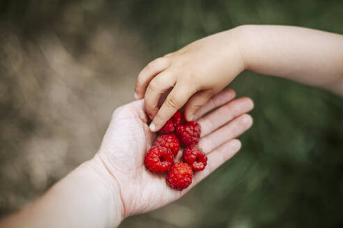 Girl's hand taking rasberry from mother's hand - VBF00086