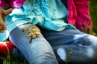 Crop view of girl sitting on a meadow with small tortoise on her thigh - LVF08902
