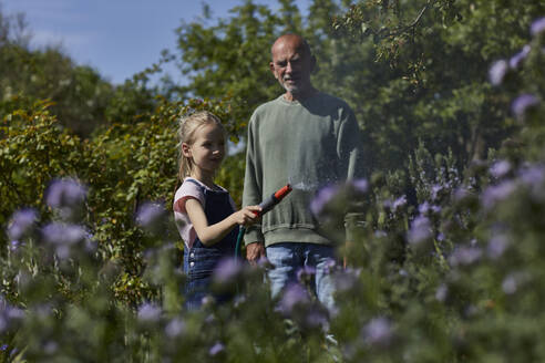 Grandfather and granddaughter watering flowers in allotment garden - MCF00864