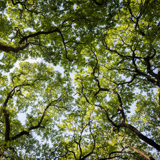 Green forest canopy - ALRF01756