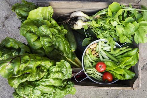 Germany, Box of freshly harvested vegetables - EVGF03621