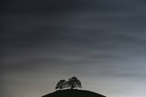 Two Trees And the Night Sky - CAVF83768
