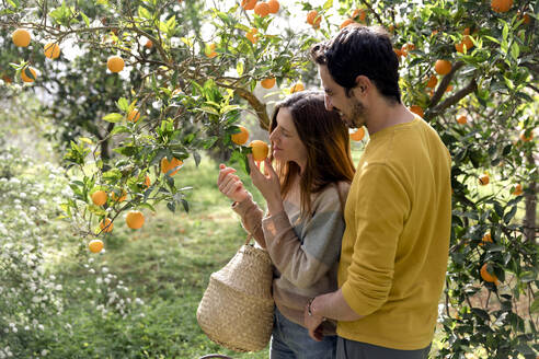 Boyfriend looking at girlfriend smelling oranges growing on tree in farm - LVVF00013