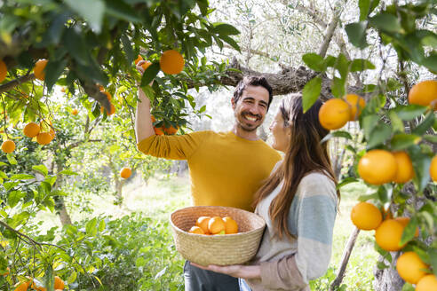 Happy couple picking oranges while standing in organic farm - LVVF00031