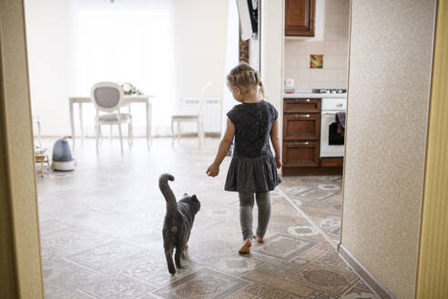 Girl walking with British Shorthair cat at home - EYAF01120