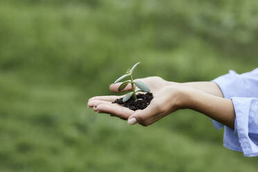 Hands holding plant and soil - MJFKF00333