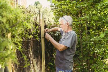 Senior man fixing garden fence - AFVF06591