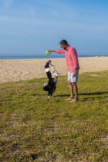 Bearded man playing with dog at beach in sunny day - CAVF84992