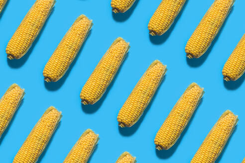Pattern of corns against blue background - FLMF00246