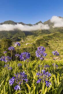 Portugal, Insel Madeira, Nordküste, bei Sao Vicente, Sao Vicente-Tal, Blick auf Ribeira Grande, Schmucklilie (Agapanthus), Nebel - WDF06085