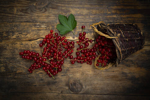 Ripe red currant berries spilling from small wicker basket - LVF08936