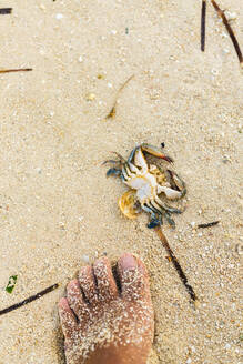 Philippines, Siargao, General Luna, Foot on sand and dead crab - JMPF00004