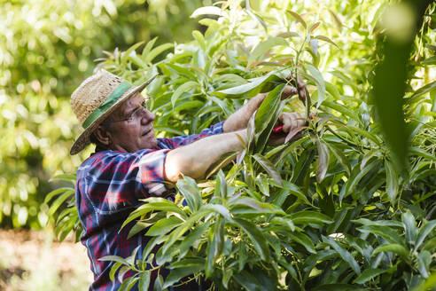 Senior gardener pruning plant in garden - LJF01616