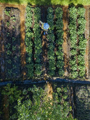 Aerial view of female worker at strawberry field, Tikhvin, Russia - KNTF04737