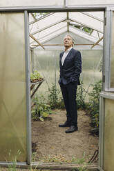Senior businessman standing in a greenhouse looking up - GUSF04076