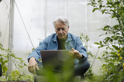 Senior man sitting in a greenhouse using laptop - GUSF04178