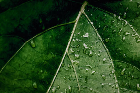 High Angle View Of Raindrops On Leaves - EYF09384