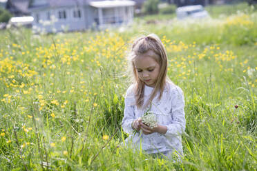 Cute girl picking flowers while sitting on grassy land - VPIF02548