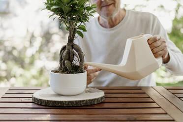 Senior man watering bonsai plant - AFVF06713