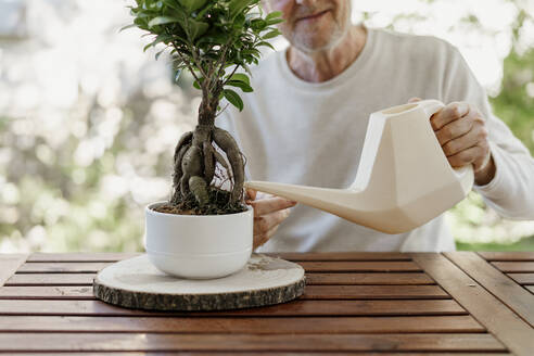 Senior man watering bonsai plant - AFVF06713