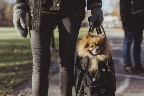 Midsection of woman carrying Pomeranian in pet carrier bag on footpath at park - MASF19261