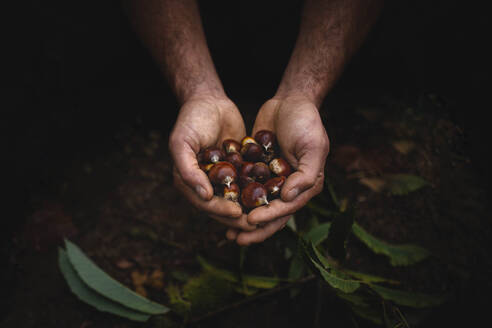 Crop hands with chestnuts - ADSF00191