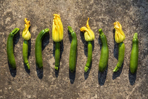 Row of fresh ripe zucchinis - NDF01097