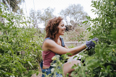 Smiling mid adult woman working in vegetable garden - EBBF00411