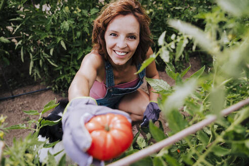 Smiling woman with border collie holding tomato while working in community garden - EBBF00417