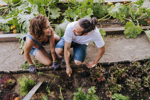 Smiling couple looking at each other while planting in vegetable garden - EBBF00420