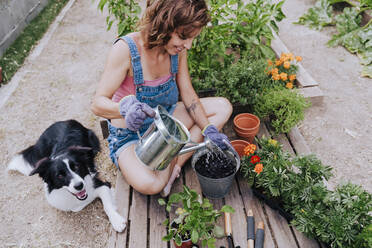 Woman watering plant while sitting with border collie at vegetable garden - EBBF00444
