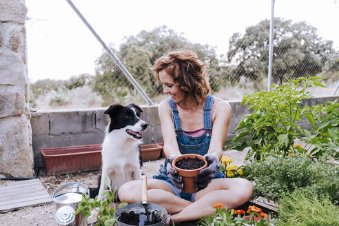 Smiling woman holding flower pot looking at border collie while sitting vegetable garden - EBBF00447